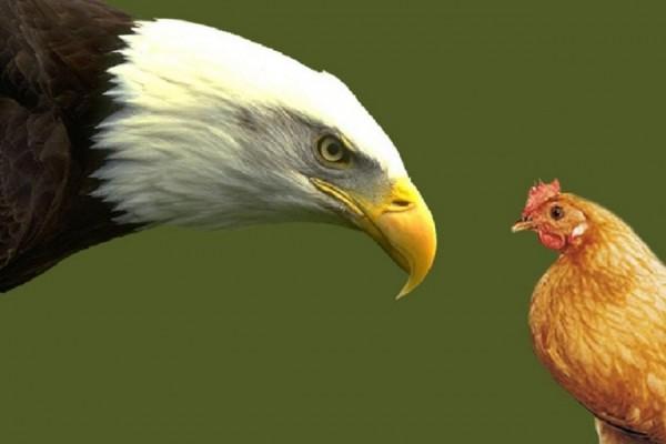 Ensinando as águias a voar como águias